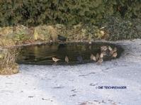 Der gartenteich im winter die teichreiniger for Gartenteich im winter